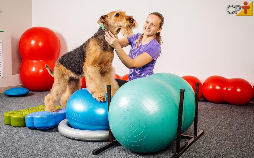 Fisioterapia e reabilitação animal: treinamento e condicionamento físico   CPT
