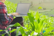 Dicas de gestão para a sua empresa rural