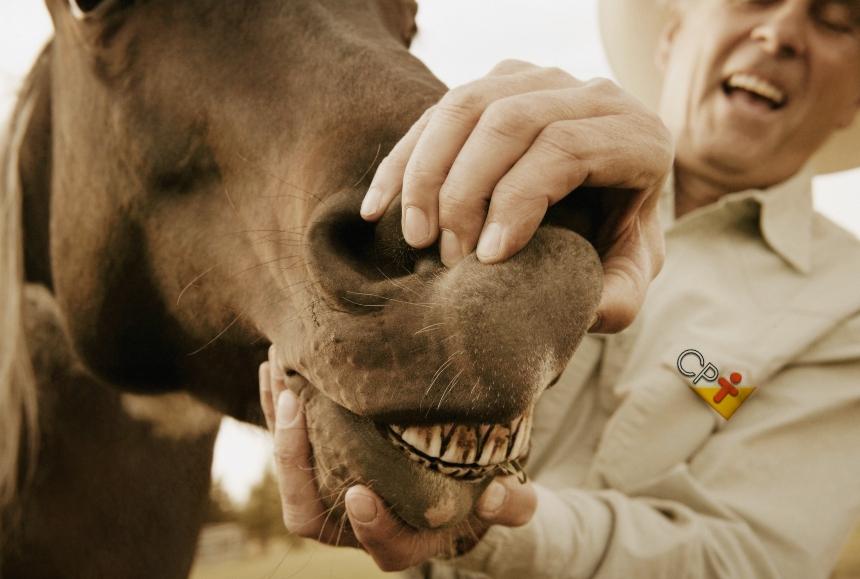 Sr. Veterinário: conheça os anexos da boca de caninos e equinos   Artigos CPT