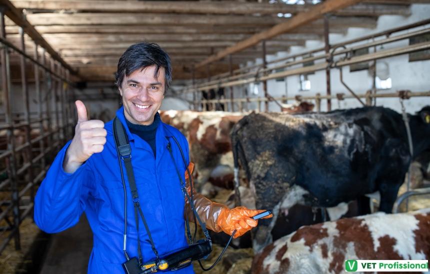 Avaliação ginecológica em vacas: por que fazer?   Artigos VetProfissional