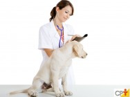 Fisioterapia e reabilitação animal: quando dar alta ao paciente?
