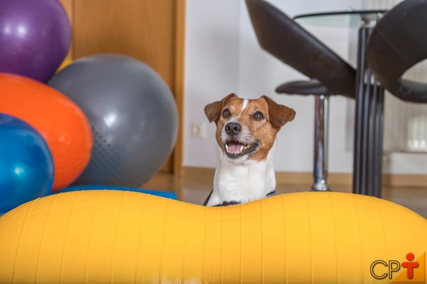Reabilitação neurológica animal. O que saber sobre esse assunto?   Artigos CPT