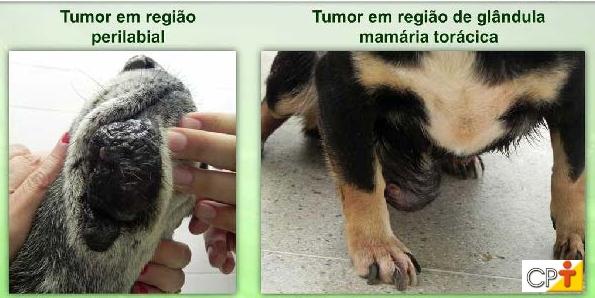 Exemplos de tumores Artigos CPT
