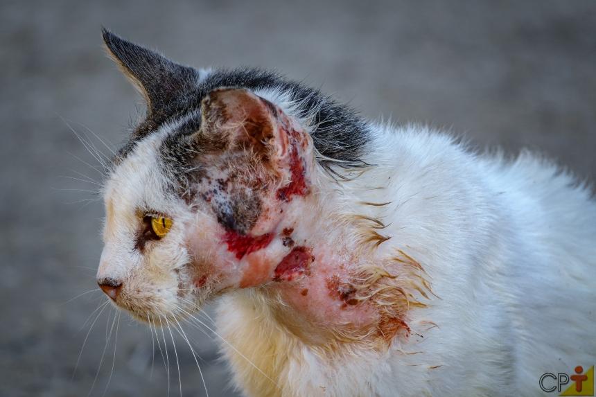 Lesões cutâneas em cães e gatos: o que são formações sólidas?   Artigos CPT