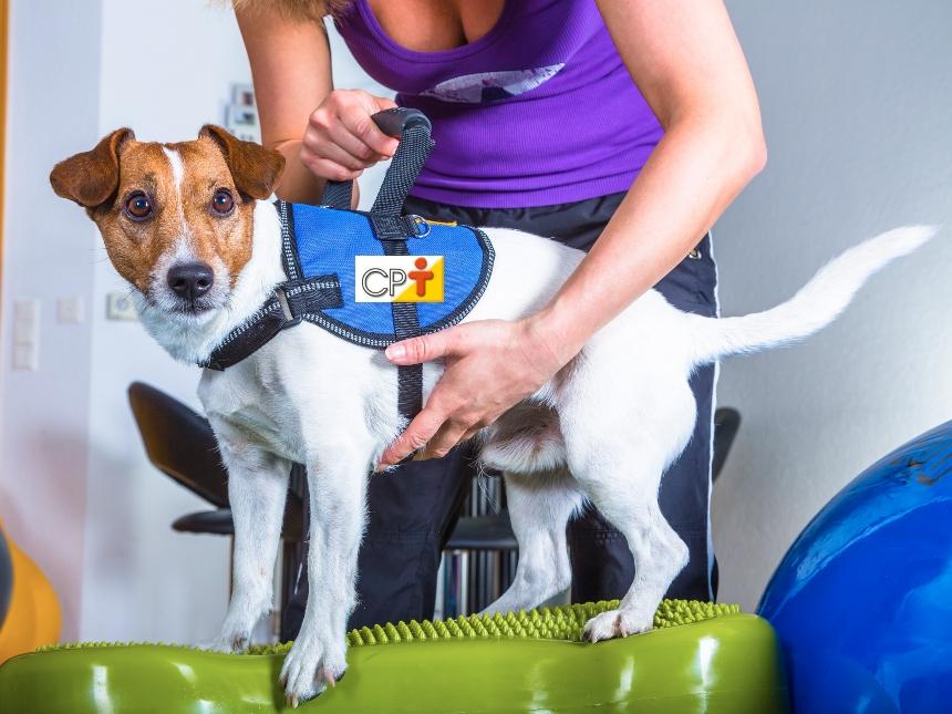 Reabilitação clínica animal. O que é e qual a sua finalidade   Artigos CPT