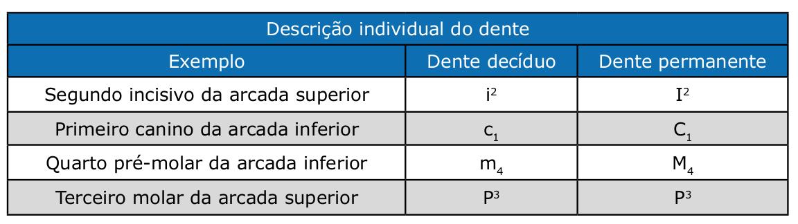 Descrição individual do dente   Artigos CPT