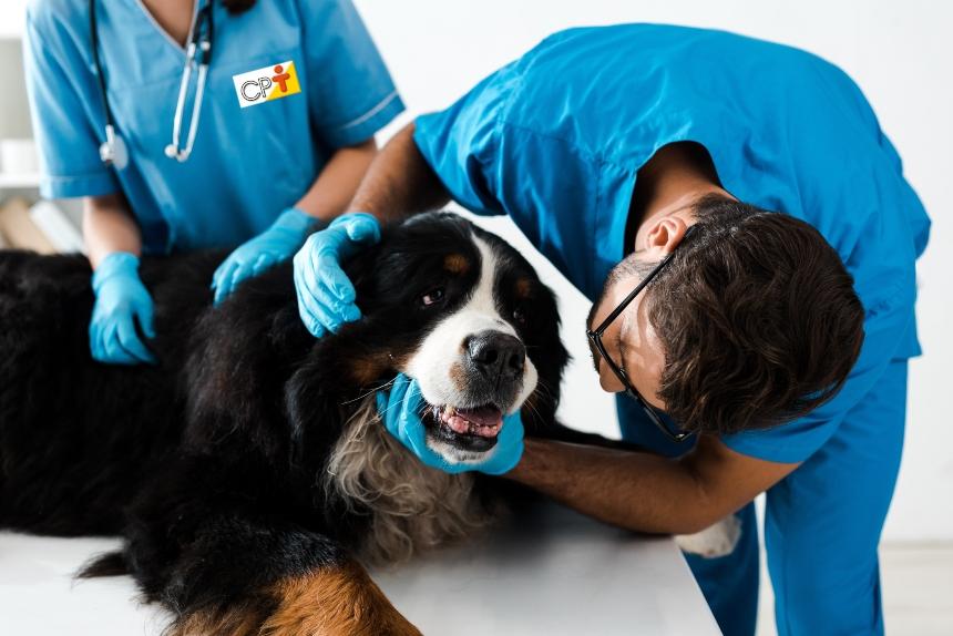 Estudando anatomia veterinária? Entenda a interpretação de fórmulas dentárias   Artigos CPT