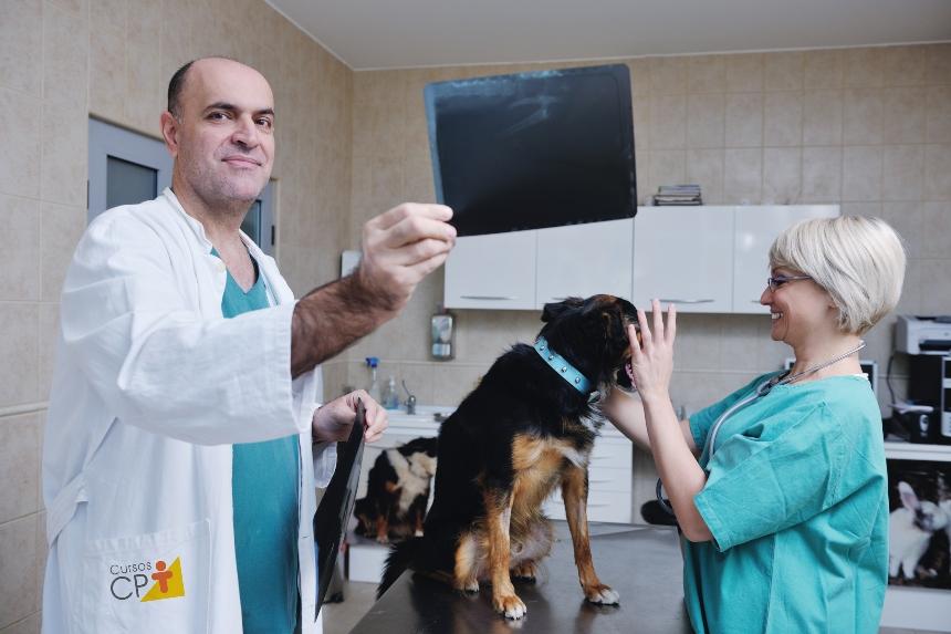 Esofagograma em cães e gatos: aprenda mais sobre isso   Artigos CPT
