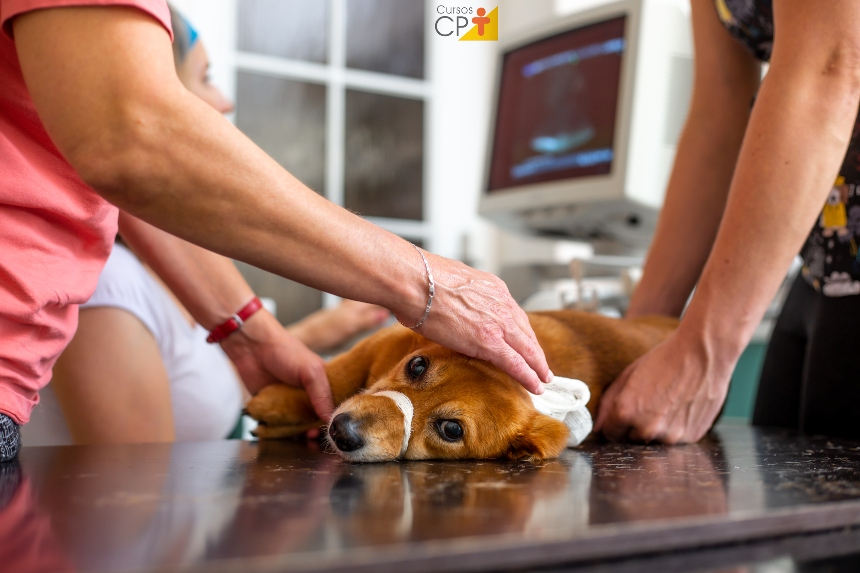 Diagnóstico por imagem de pequenos animais. Isso é mesmo necessário?   Artigos CPT