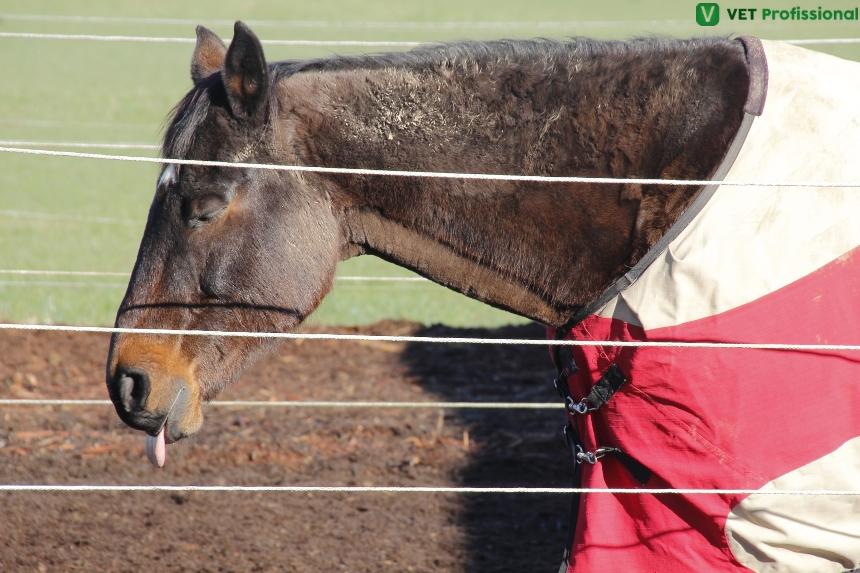 Quando indicar a eutanásia animal?   Artigos VetProfissional