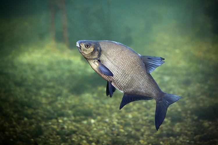 Peixe - imagem ilustrativa