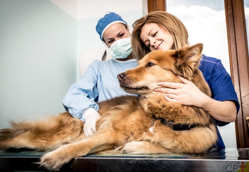 Palpação do sistema cardiovascular de cães e gatos. Como fazer?