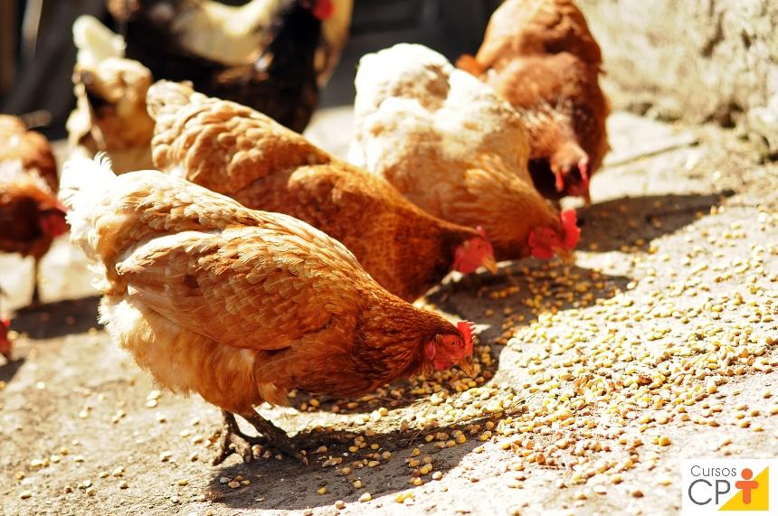 Base da alimentação de aves no Brasil? Milho e soja   Artigos CPT