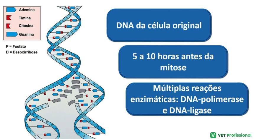 Replicação do DNA e reações enzimáticas Artigos VetProfissional