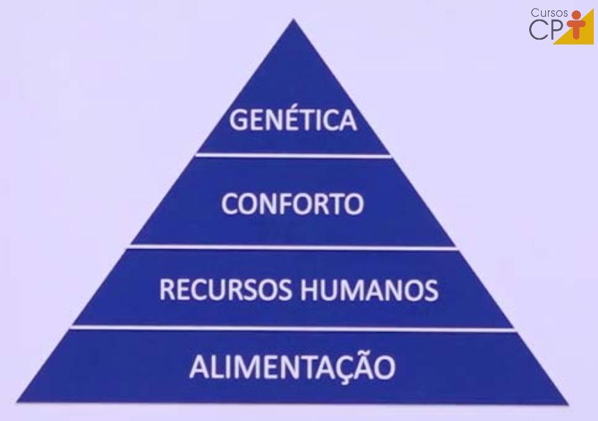 Pirâmide dos fatores que influenciam a produção animal   Artigos CPT