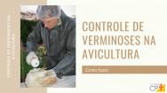 Controle de verminoses na avicultura: como fazer