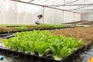 Aquaponia: novo e-book para você ganhar dinheiro cultivando plantas e peixes em um sistema único!