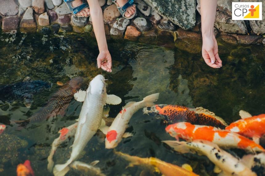 Vai criar peixes ornamentais para comércio? Aprenda a formular rações   Artigos CPT
