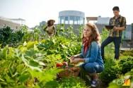 Práticas e vantagens da agricultura regenerativa