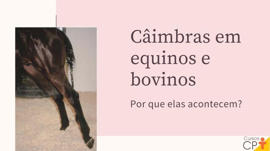 Câimbra em equinos e bovinos: por que elas acontecem?   Artigos CPT