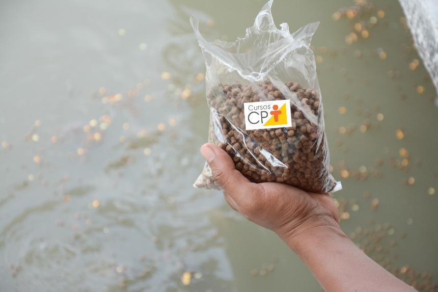 Criação comercial de peixes ornamentais: proteínas e aminoácidos   Artigos CPT