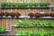 Super dicas para montar uma horta vertical em casa