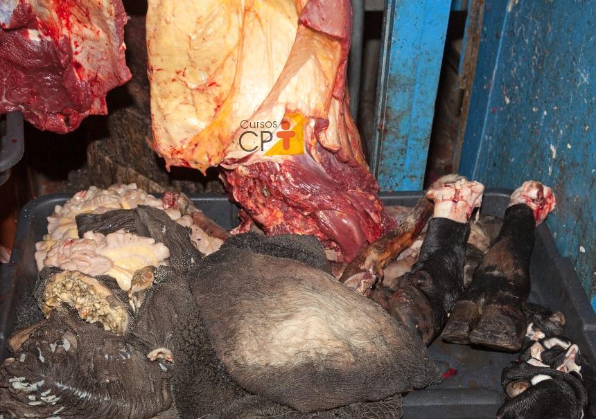 Resíduos animais: como descartá-los corretamente?   Artigos CPT