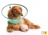 5 cuidados pós-cirúrgicos em cães