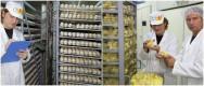 Incubatórios e nascedouros industriais de ovos. Saiba mais sobre eles