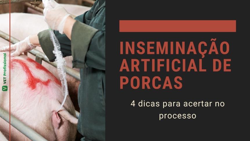 4 dicas para acertar na inseminação artificial de porcas   Artigos VetProfissional