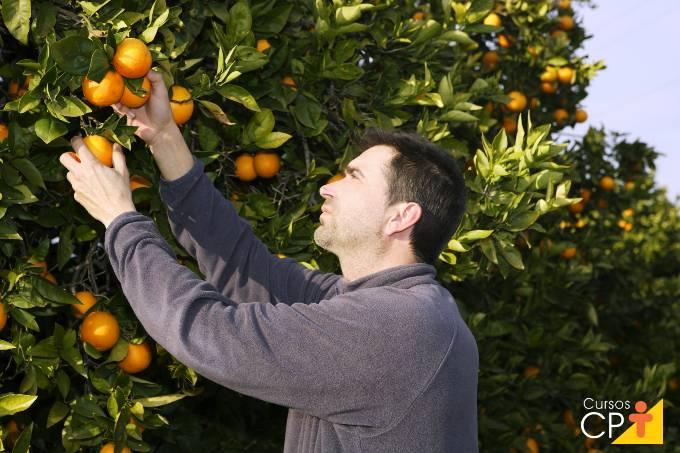 4 principais doenças da laranjeira