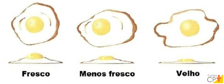 Comparativos entre as gemas de ovos frescos e não frescos Artigos CPT