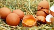 Por que ovos marrons são mais aceitos que brancos e azuis?
