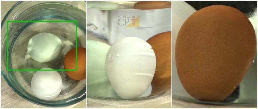Ovo novo, ovo velho e ovo intermediário: posição correta em um vasilhame de água     Artigos CPT