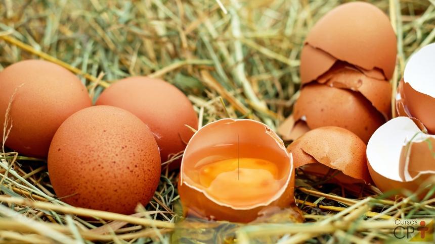 Por que ovos marrons são mais aceitos que brancos e azuis?   Artigos CPT