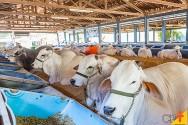 Planejamento da estrutura e da capacidade do confinamento de bovinos de corte
