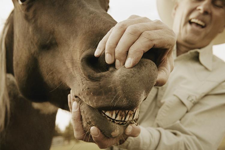 Odontologia equina - imagem meramente ilustrativa