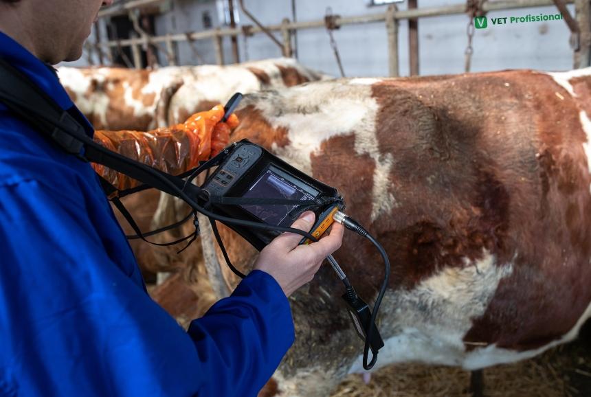 O uso da ultrassonografia aplicada à reprodução de bovinos   Artigos VetProfissional
