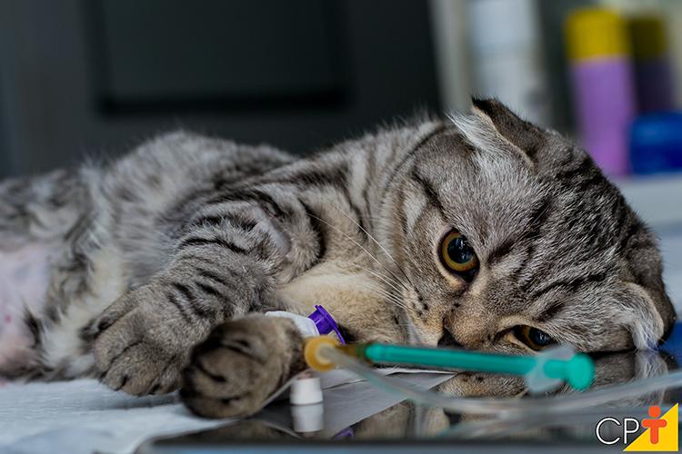 Gato na mesa de cirurgia - imagem ilustrativa