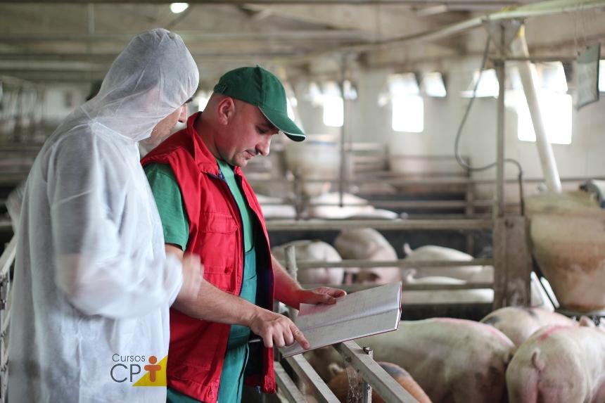 Dejetos suínos: por que compostar?   Artigos CPT