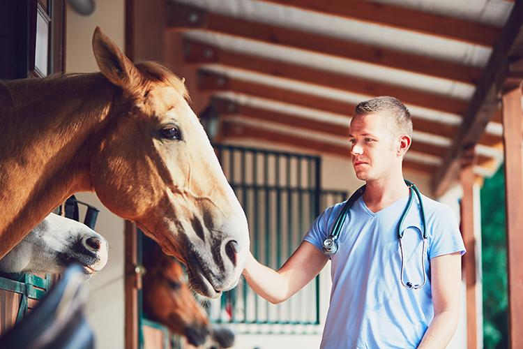 Equino e veterinário - imagem ilustrativa