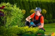 Principais atribuições de um jardineiro
