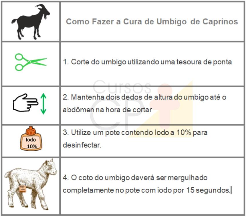 Esquema: como curar umbigo de caprinos Artigos CPT
