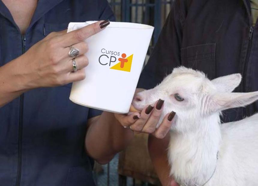 Fornecimento de colostro em mamadeira feita com porta leite de saquinho e bico para caprinos Artigos CPT