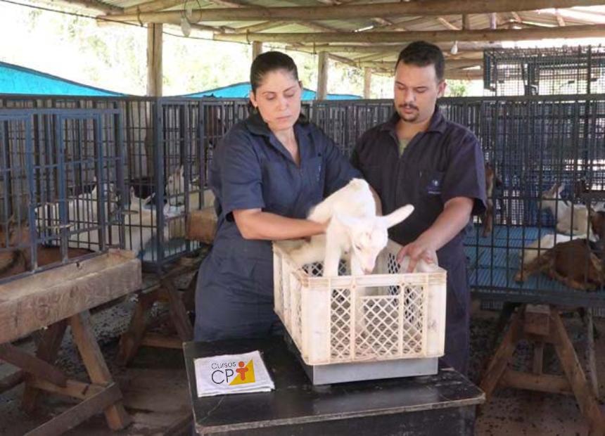 Pesagem dos animais em balança digital com auxílio de um container Artigos CPT