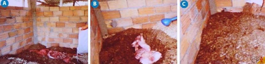 (A) - Carcaça de suíno com a barriga aberta e vísceras perfuradas, (B) – Carcaças  retalhadas e umidificação da cobertura; (C) - Camada de compostagem pronta   Artigos CPT