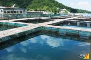 Como montar uma piscicultura de sucesso?