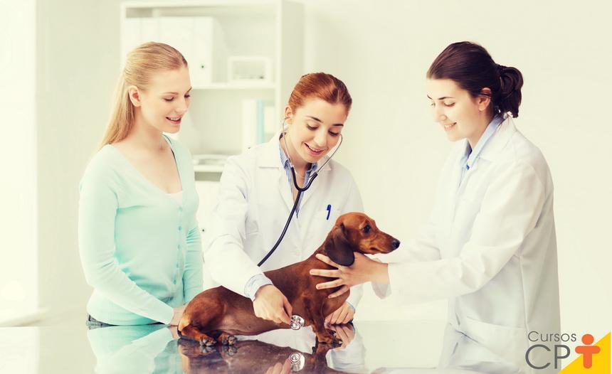 Avaliação pré-anestésica em animais: você sabe qual a importância desse procedimento?