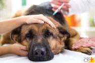 Medicação pré-anestésica em pequenos animais. Qual o objetivo do uso dessa medicação?