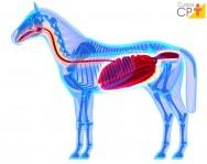 Necropsia em equinos? Faça a retirada dos órgãos corretamente